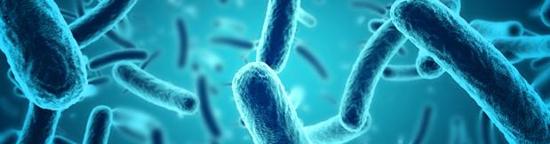 Souches Microbiotiques